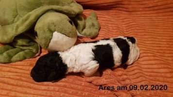 ares woche